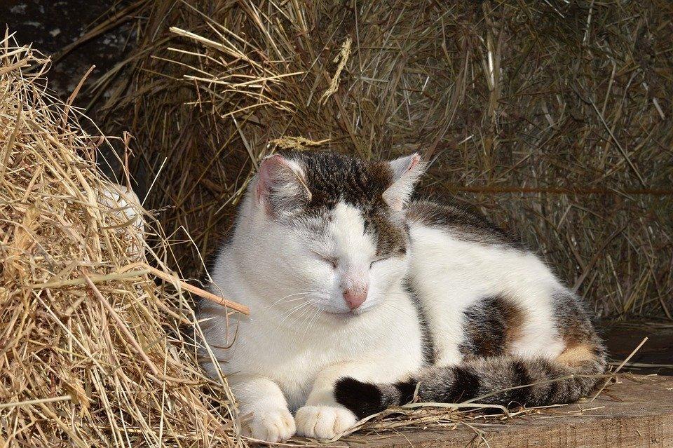 gattino che dorme noia scrittura david foster wallace
